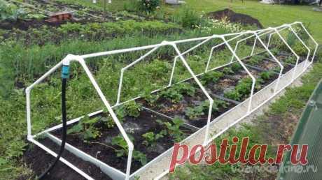 Self-polyroll hotbed small greenery