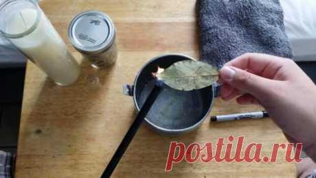 Подожгите лавровый лист и понаблюдайте за тем, что произойдет через 10 минут! | Четыре вкуса