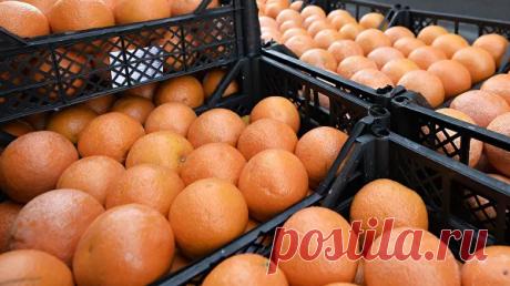 Ученые: в чем смертельная опасность грейпфрута   Всегда в форме!