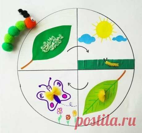 Поговорите с детьми о жизненном цикле насекомых  Бабочки - насекомые с полным превращением, так как личинка (гусеница) полностью отличается от взрослой особи. Их жизненный цикл состоит из 4 стадий: яйцо, личинка (гусеница), куколка и взрослое насекомое.  Для изготовления этой поделки из макарон своими руками вам потребуются макароны трех видов: спиралька (это будет гусеница), ракушка (куколка) и макаронинка в форме бабочки (взрослая особь). Яйцо заменит рисовое зернышко.  ...