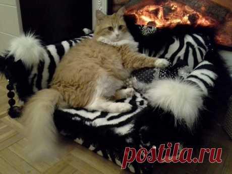 Диваны для кошек из коробок, поролона и искусственного меха