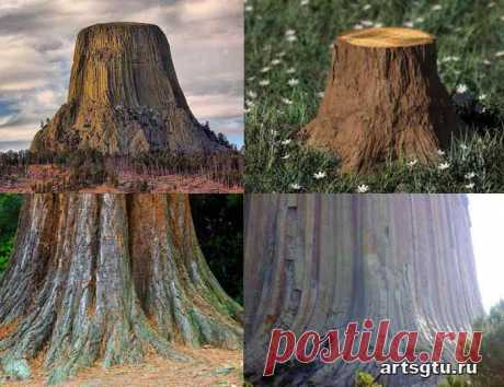 Кремниевая эра. Допотопные деревья Кремниевая эра - такое понятие не присутствует ни в одних учебниках, её не встретишь в научном мире, это предположение о другой форме жизни, которая раньше могла присутствовать на Земле.