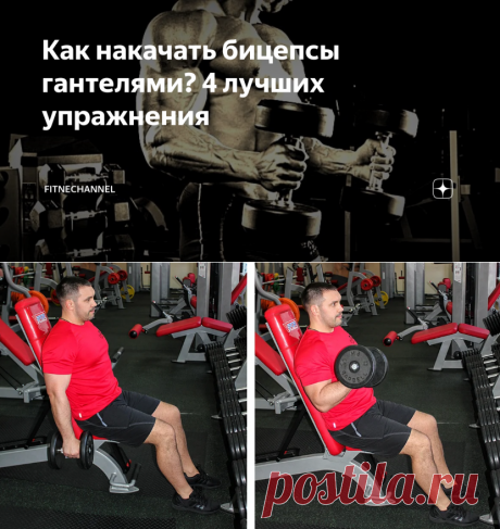 Как накачать бицепсы гантелями? 4 лучших упражнения | fitnechannel | Яндекс Дзен