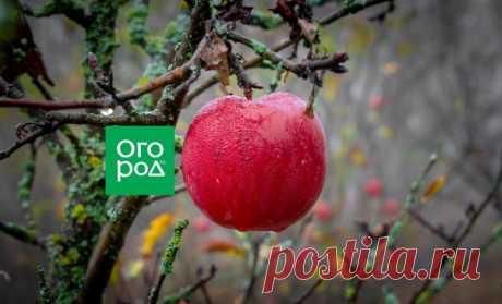 Влагозарядный полив осенью: нормы воды для деревьев и кустарников | Уход за садом (Огород.ru)