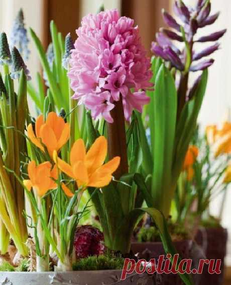 Весна в цветочном горшке
