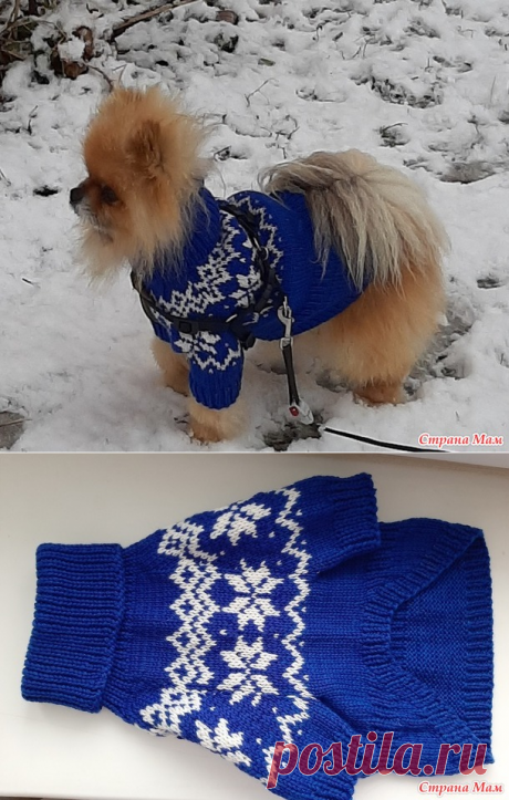 Новогодний свитерок собачке - Вязание - Страна Мам