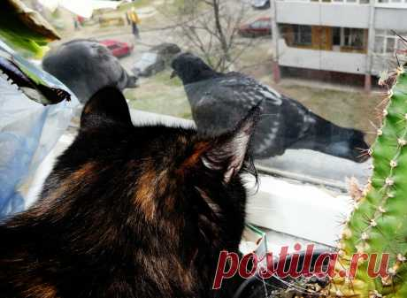 #на_окне  #кошки