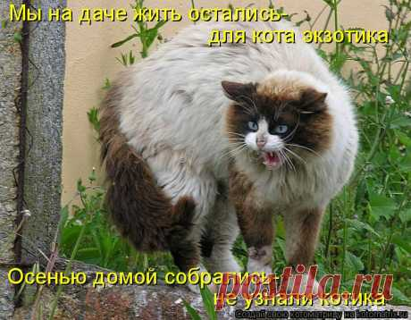 ¡En las casas de campo son llevados los gatos de la belleza desconocida! ¡De campo kotomatritsa!