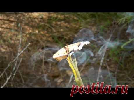 Егерский способ защиты от комаров  | Когда забыл пшикалку