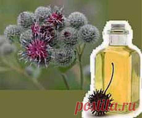 Репейное масло для волос. Отзывы. Применение | Блог Ирины Зайцевой