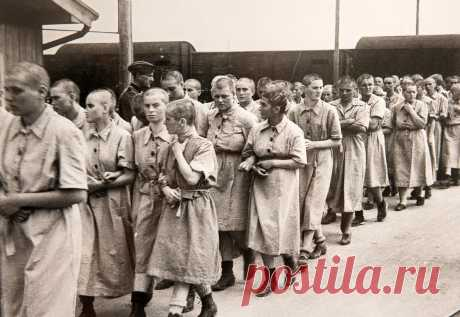 «Собачье сердце». Рассказ одной из узниц немецких концентрационных лагерей