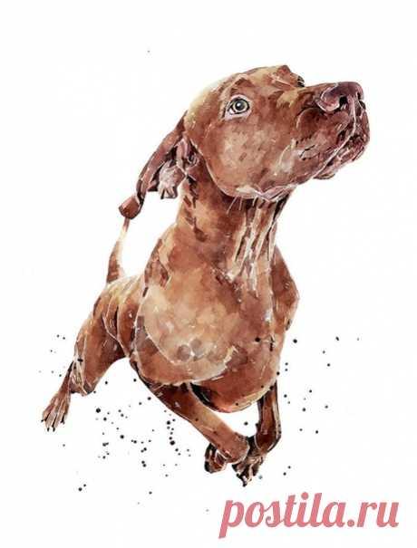 Ты ратуешь за петицию призывающую защитить от агрессивных уличных собак ? Ты голосишь, повышая градус ужасности, о защите детей, играющих во дворе от опасных, бродячих, стайных ? Ты пишешь заявление в прокуратуру, взывая к охране твоего попранного права на безопасность ? Ты утверждаешь о необходимости тотального отстрела и уничтожения бездомных четырехлапых, питающихся около дворового мусоросборника, выброшенным и негодным для твоего употребления. Прежде чем истерить - заг...