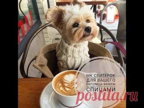 МК вяжем свитер для собаки, свитерок спицами для домашнего питомца Часть 1 - YouTube