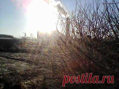 1 ноября 2013 г. Зимнее утро.