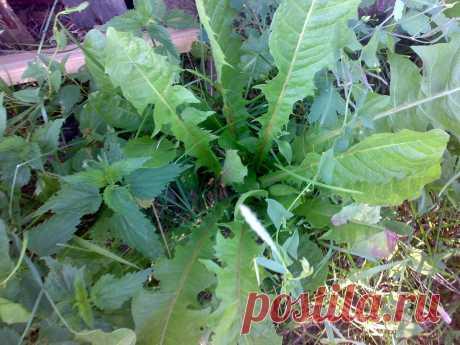 Дочь нашла тетрадь со старыми записями по уходу за растениями. Овощи быстро отреагировали на подкормки по рецептам бабушки | Дачная жизнь | Яндекс Дзен