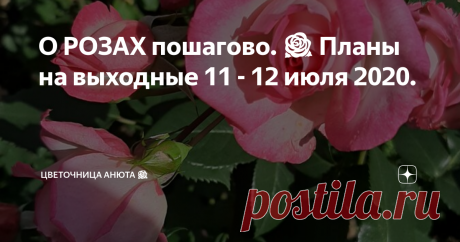 О РОЗАХ пошагово. 🌹 Планы на выходные 11 - 12 июля 2020. Традиционные подсказки по уходу за розами.