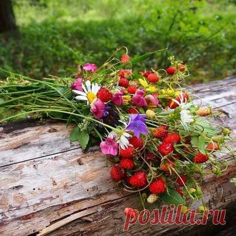 Photo by Ирина Сабитова on June 27, 2020. На изображении может находиться: растение, цветок, на улице и природа