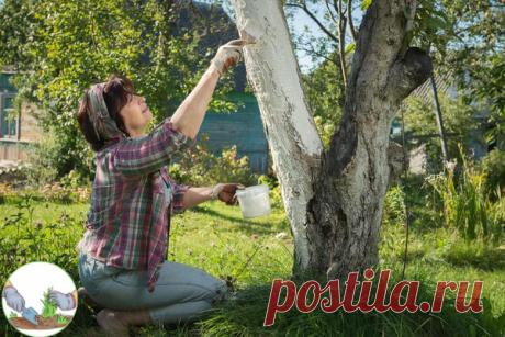 Дачные работы в ноябре. Полезные советы дачникам от опытного садовода   #огород