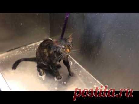 La gata ha aprendido a pedir al ama en la lengua humana