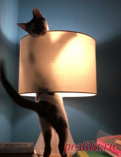 20 смешных фото котов, которые показывают, кто в доме хозяин - Дай лапку - медиаплатформа МирТесен