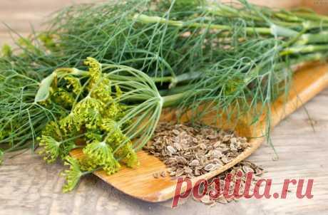 Одна ложка этих семян снизит давление, уровень сахара и избавит от гастрита О пользе семян укропа известно с давних времен. Его активно выращивали более 7000 лет назад…