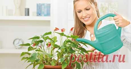 Это средство отлично реанимирует и оживит даже самые чахлые домашние растения! Сегодня мы расскажем тебе, как всего лишь за пару дней оживить комнатные растения, прекрасно их подпитать, избавить от различных болезней, сделать их здоровыми, яркими и цветущими. Восстановите свои комнатные растения …