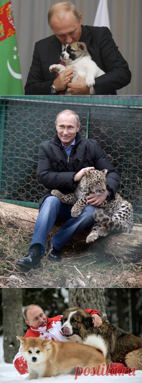 Зоопарк Путина | Geo - Непознанный мир: Земля