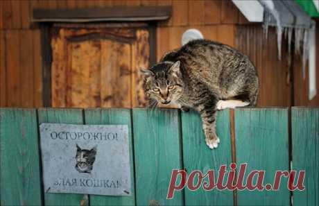 Гроза мышей, птиц и незваных гостей на снимке Алексея Пантелеева: nat-geo.ru/community/user/203256/.