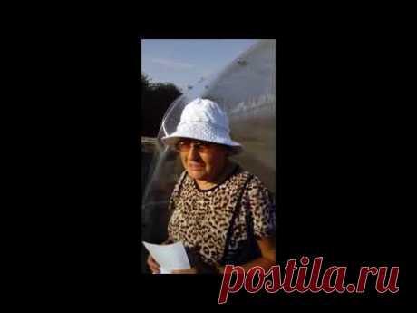Компания Теплицы Ярославль отзывы - YouTube