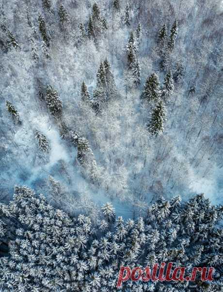 Зимний лес в Сергиево-Посадском районе. Снимал Антон Шваин: nat-geo.ru/community/user/121362