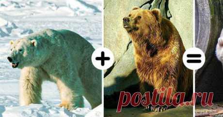 7 существ, которые эволюционируют, пока вы читаете эту статью ( 8 фото ) . Тут забавно !!!