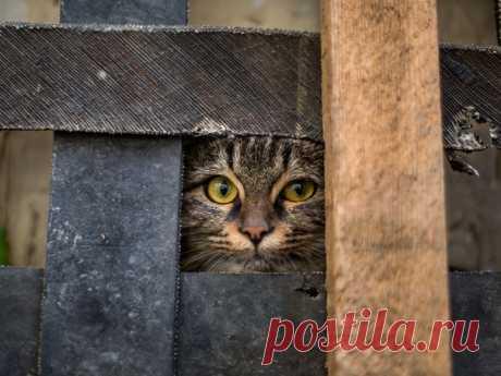 «Вас заметили» Кота, удачно вписавшегося в текстуры, сфотографировал Б.Дамир: nat-geo.ru/community/user/162233/.