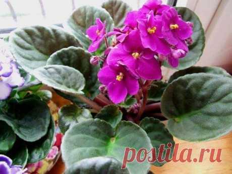 Эти 10 растений приносят в дом деньги и благополучие