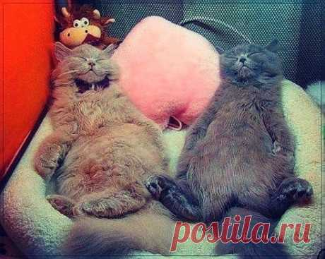 Фото Без названия. Альбом Фото группы - 11099 фото. Фотографии Без кота и жизнь не та!.