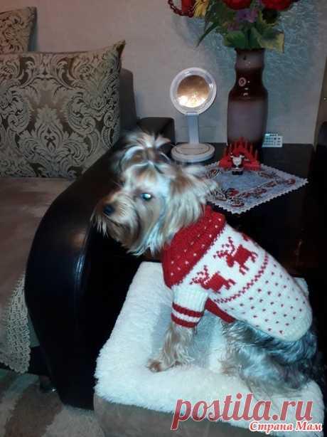 Рождественский свитерок для собаки - Гардероб для наших любимых питомцев (собак, кошек) - Страна Мам