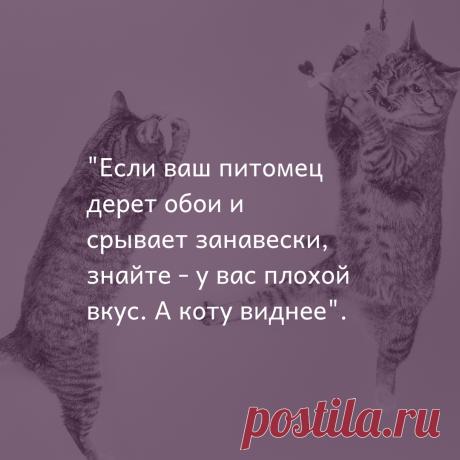 Либо котик очень хочет свой домик с когтеточкой ☝️🐈А мы на заказ‼️ изготовим модульные домики с когтеточками, лестницами, лежанки - гамачки, родильные домики, беговые кототренажеры 👍🐅🐕 #mixcat#russia#rus#cat#cats#catstagram#catsofinstagram#woodworking#kissingvideo#handmade#homedecor#модульныедомикидлякошек#беговаядорожка#котомебель#кошкиндом#лежанкадлякошки#лестницадлясобак#лестница#бурмы#бурма#бурманскаякошка#родилочка#длякошекисобак#моипитомцы