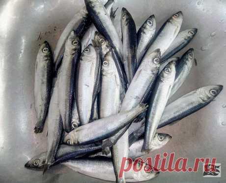 Тушёная рыбка. С овощами. Салака, килька, мойва и даже минтай. Просто, дёшево и очень вкусно. | высокая(НЕТ)кухня | Яндекс Дзен