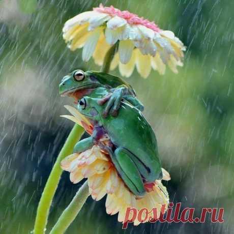 Фотографии природы, доказывающие, что в мире нет ничего милее, интереснее и ужаснее