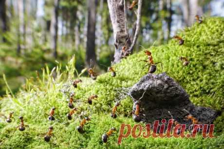Интересные факты о муравьях Муравьи распространены практически по всему миру. Благодаря широкому распространению, многочисленности и хорошо заметным гнёздам муравьи повсеместно известны людям. И сегодня мы подготовили самую интересную информацию о них …
