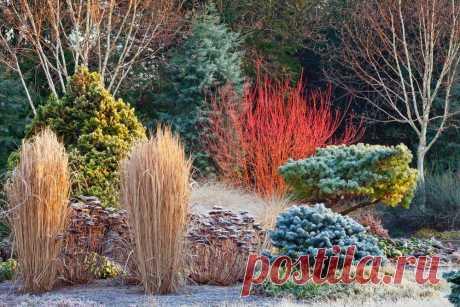 Идеи для зимнего сада | Журнал Ярмарки Мастеров