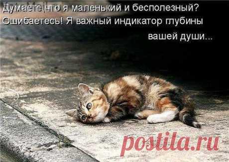 Добрые поступки | KotoMail.ru