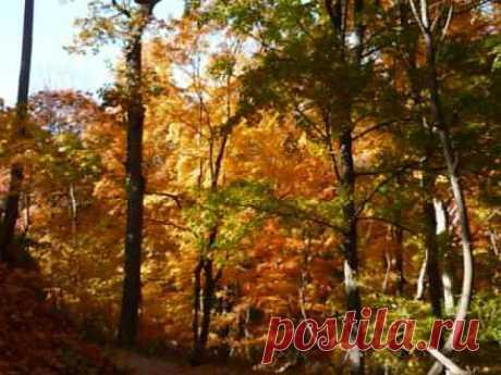 Осень. А. Розенбаум. Вальс бостон - YouTube