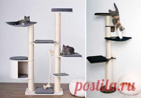 Целая система для кошачьих развлечений   Новости   Animal.ru