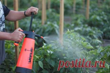 Как подкормить помидоры борной кислотой, йодом и золой: когда необходима подкормка, рецепт приготовления раствора