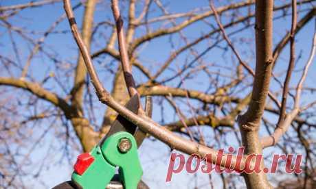 Грамотная обрезка яблонь и груш