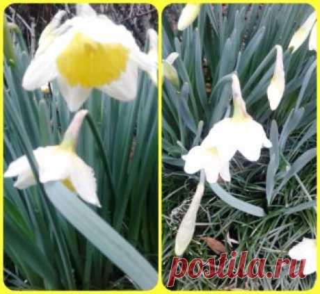 Ребята, в Лазаревке уже самая настоящая весна! В парке, на улицах, в скверах - буйство красок и ароматов! Пишите, звоните - мы всех вас ждем!