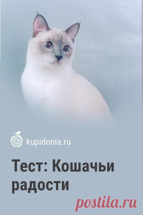 Тест: Кошачьи радости. Тест о кошках из серии о домашних животных. Проверьте ваши знания!
