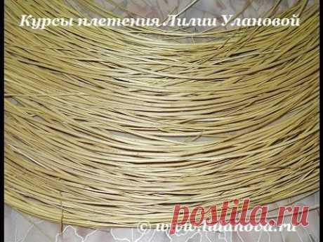 Сбор и подготовка лозы - ивового прута - Collection and preparation of vines - wicker - YouTube