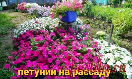 Какие цветы можно высаживать в конце февраля. | АЗБУКА ЦВЕТОВ | Яндекс Дзен