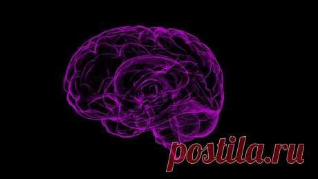 Ученые разгадали главную тайну человеческого мозга